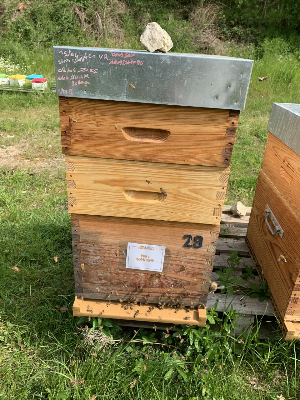 Parrainage de ruche 2019