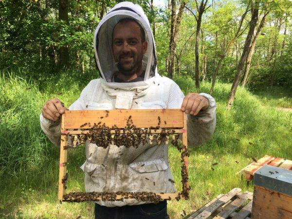 Parrainage de ruches d'abeilles - Apiculteur professionnel Alexandre Valgrès