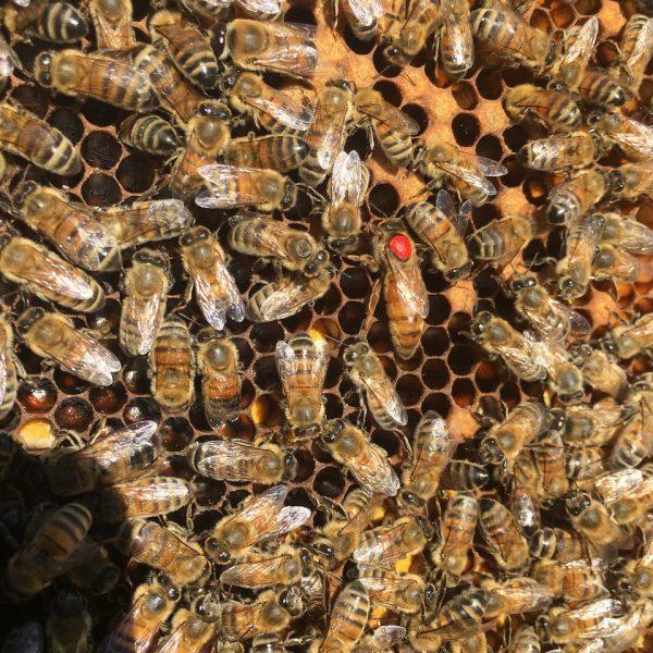 Parrainage de ruches d'abeilles ouest parisien