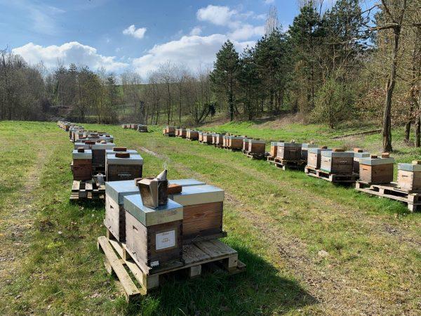 Parrainage de ruches d'abeilles pour miel, apiculture locale entreprises