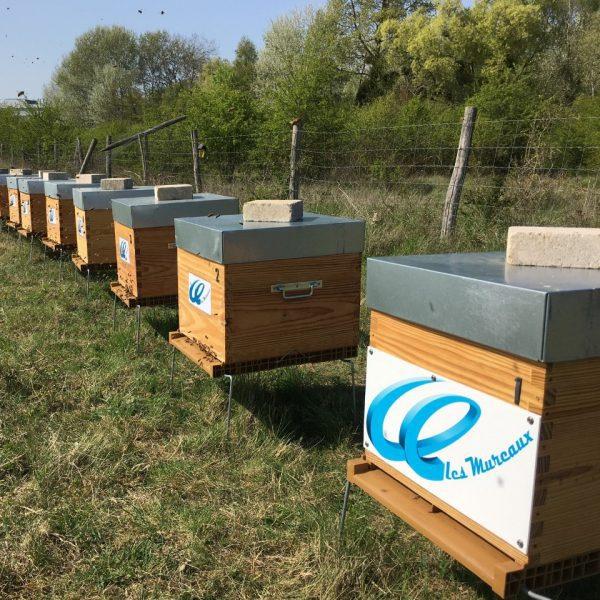 Personnalisation des ruches parrainées par particuliers et entreprises