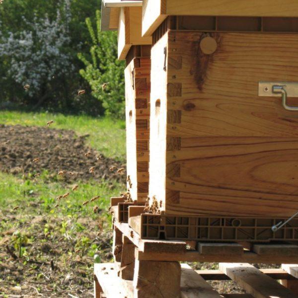 Ruche d'abeilles, exploitation à Brueil en Vexin Yvelines