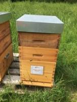 Parrainage de ruche 2018