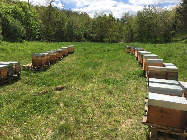 Ruches d'abeilles entreprises particuliers ouest parisien