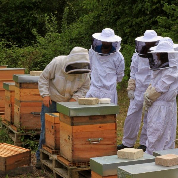 Stage initiation apiculture yvelines