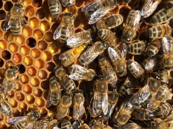 Parrainer une ruche, apiculteur dans les Yvelines
