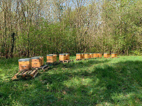 Parrainage de ruches dans les Yvelines